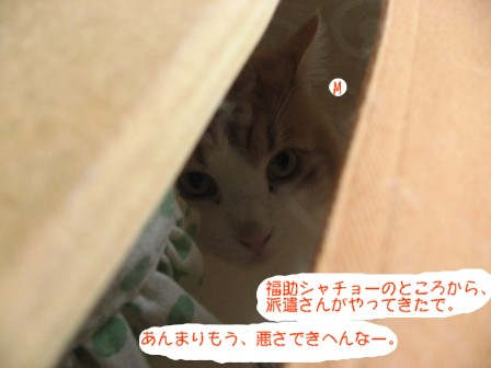 コピー ~ IMG_7006.JPG
