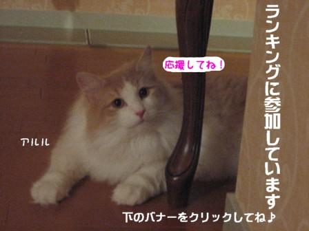 コピー ~ IMG_9842.JPG