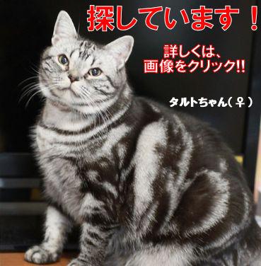 タルちゃん.jpg