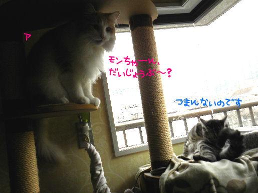 モンちゃん、大丈夫?.JPG