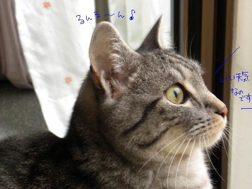ルンルン~♪.JPG