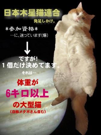 日本木星猫連合.jpg