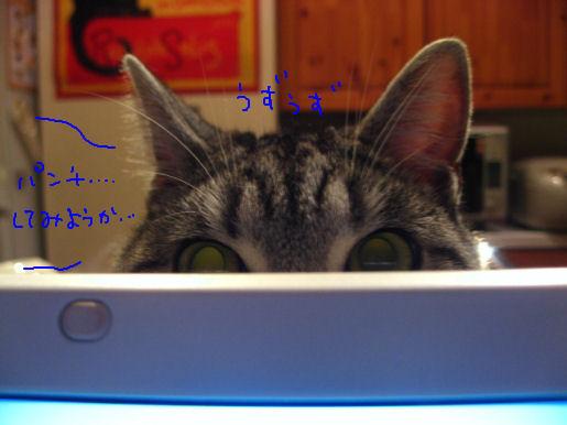 猫パンチしてみようか.JPG