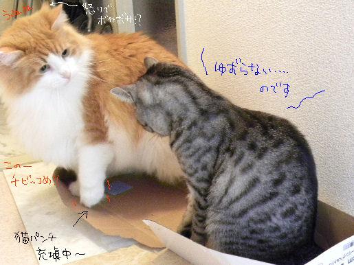 猫パンチ充填中.JPG