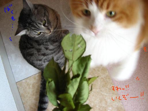猫パンチ!.JPG