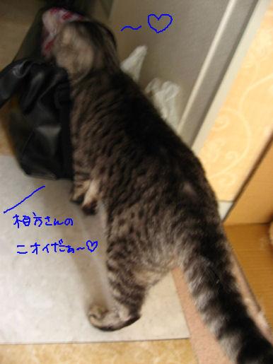 相方さんのかほり.JPG