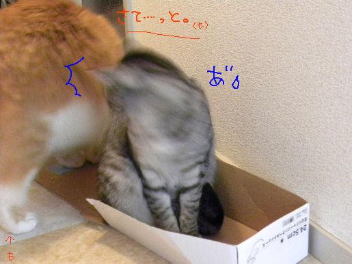 箱狂あらわる!.JPG
