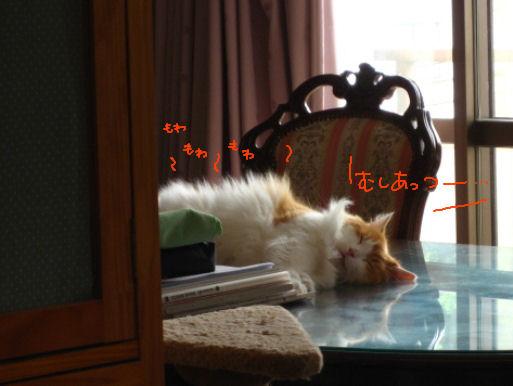 蒸し暑い.JPG
