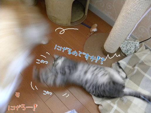 逃げるが勝ち!?.JPG