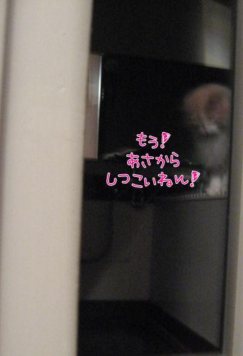 風呂場へ避難.JPG