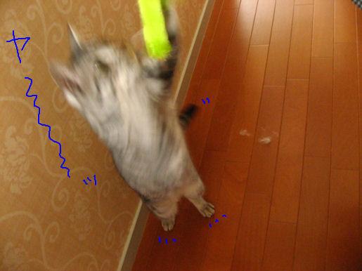 飛び掛る! 5.JPG