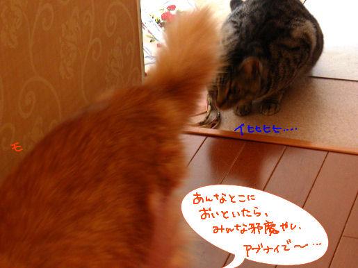 Monちゃん、後ろ、後ろーー!!.JPG