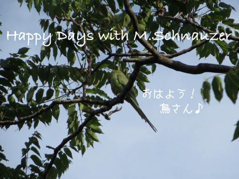 image-20140513210729.png