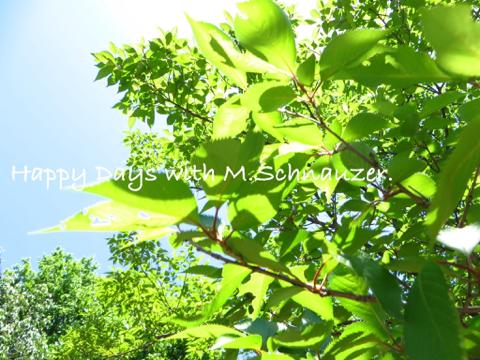 image-20140524213428.png