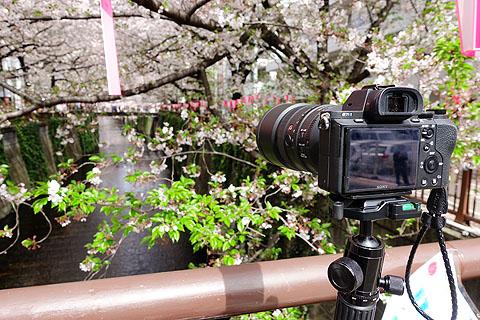 Sakura-05.jpg