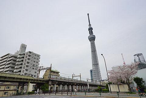Sakura-17.jpg
