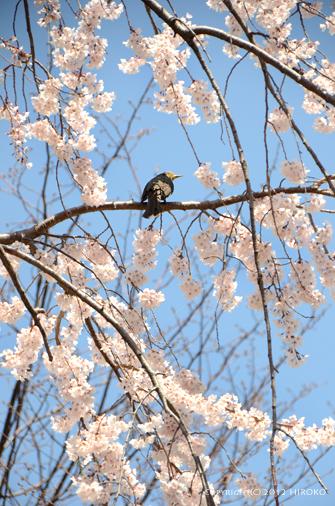 Flower_015.jpg
