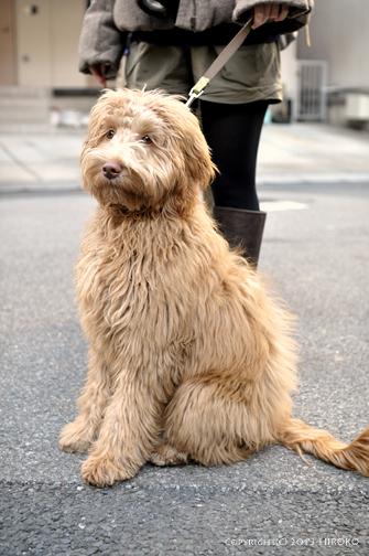 dog_レイラ.jpg