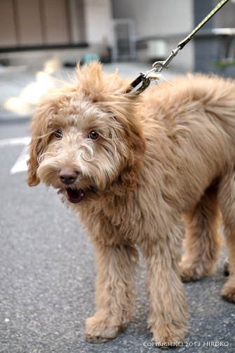 dog_レイラ2.jpg