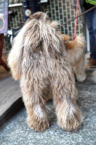dog_Go3.jpg