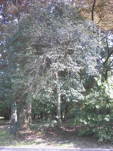 京都府立植物園の木の写真