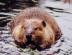 beaverさんの画像