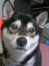 コロ子さんの画像