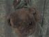 powermacg4さんの画像