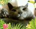 chipuさんの画像