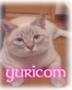 yuricomさんの画像
