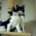 チャコ&ミニさんの画像
