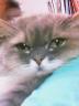 りみこさんの画像