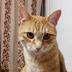 sumi-cyanさんの画像