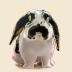 dafuneさんの画像