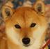Ryu1さんの画像