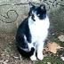 猫ネコさんの画像