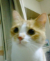 sainekoさんの画像