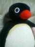 pinguさんの画像