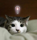 miya_gonさんの画像