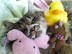 兎猫さんの画像