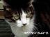 KITTY-Mさんの画像