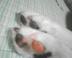 りっぱchanさんの画像