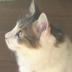 桜梅さんの画像