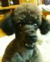 jojoさんの画像