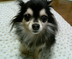 kaeichi-maさんの画像