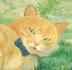 kazuさんの画像