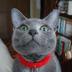 テオさんの画像