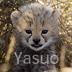 Yasuoさんの画像
