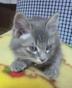 kittyhawkさんの画像