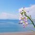 horizon-blueさんの画像
